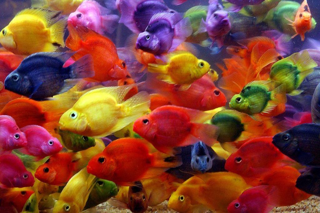 Рыбы-попугаи