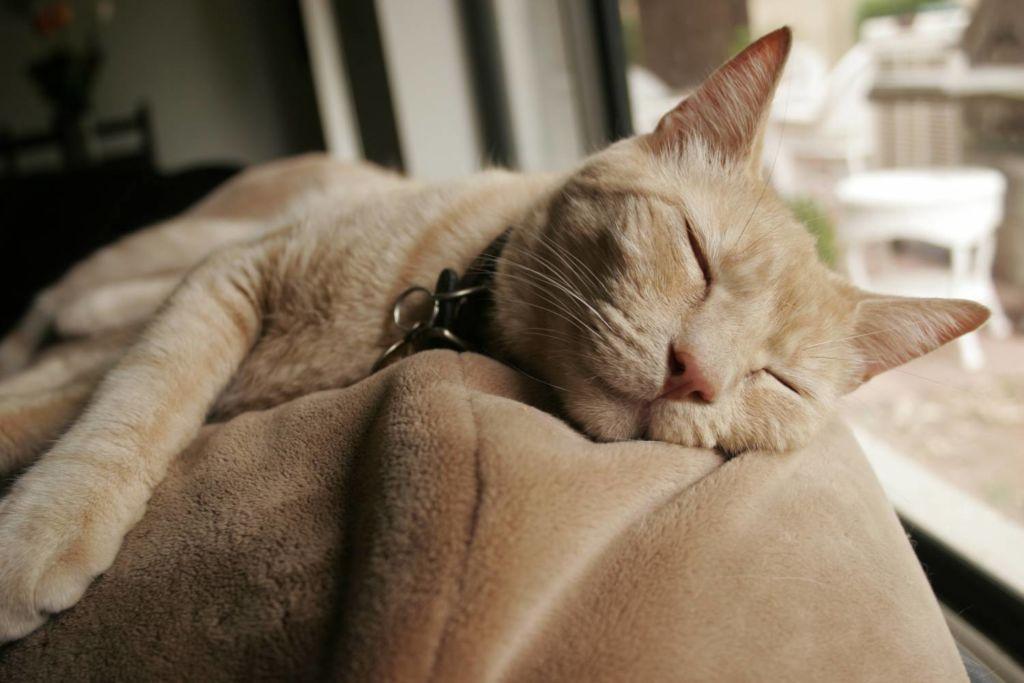 Успокоительные средства для кошек при стрессе, агрессии и переезде