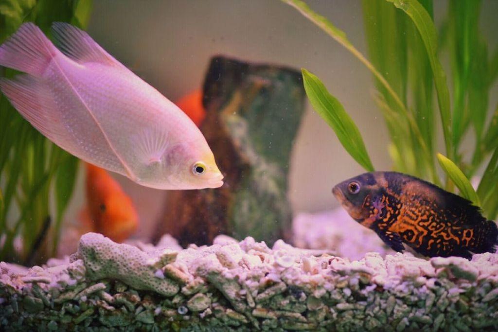Обязательно нужно учитывать, что некоторые рыбки защищают свою территорию