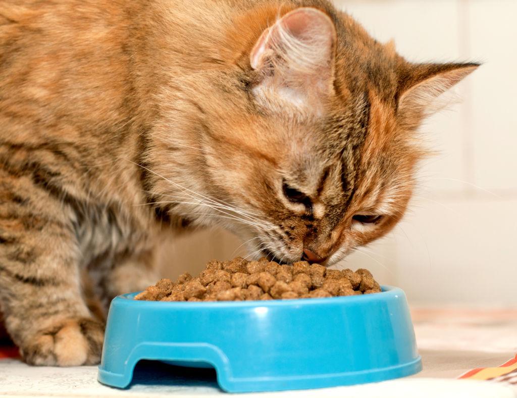 Кот ест корм для вывода шерсти