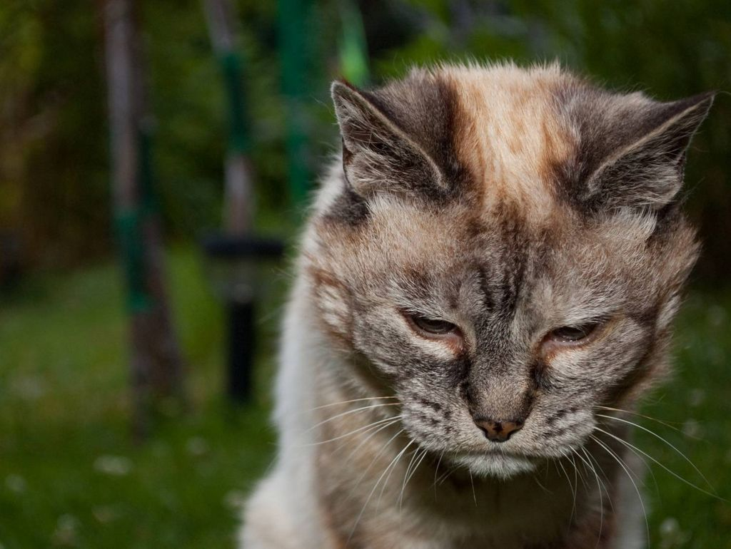 Гамавит применяют для профилактики заболеваний у возрастных животных