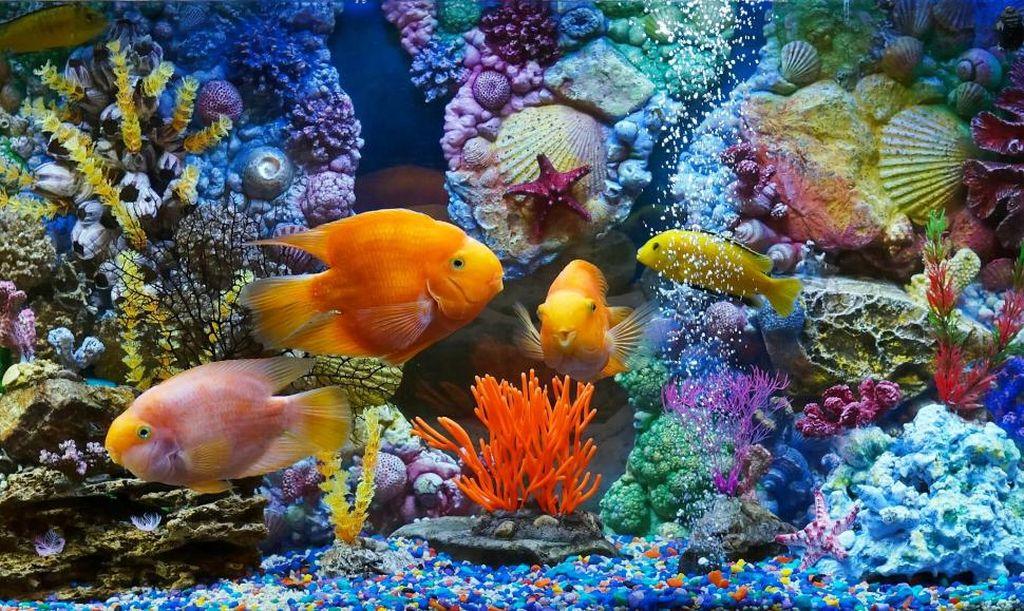 16 лучших видов аквариумных рыбок