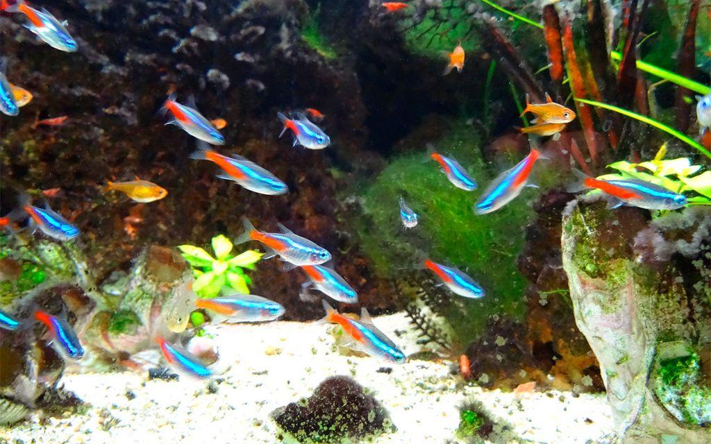 Рыбки не создают шума и положительно влияют на эмоциональное состояние человека