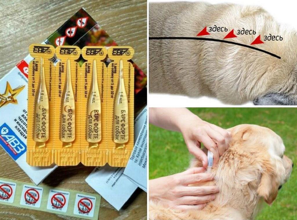 Применение капель на собаках