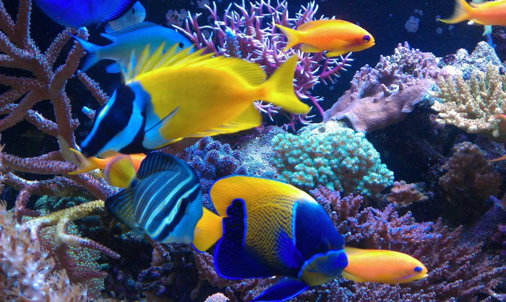 15 самых красивых и экзотических аквариумных рыбок