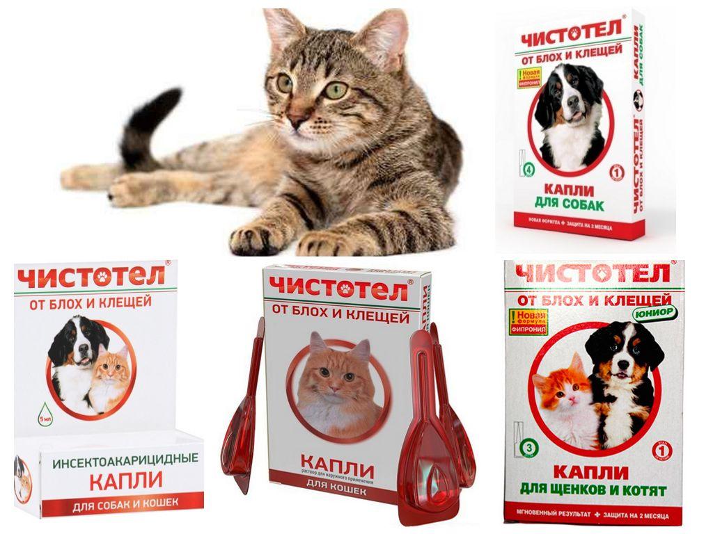 Капли производятся как для кошек, так и для котят, и для собак
