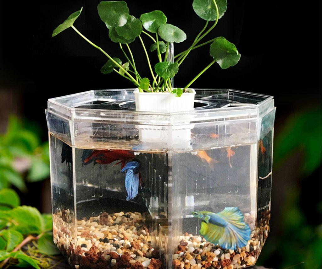 Сколько рыбок можно держать в аквариумах объемом 20, 50 и 100 литров