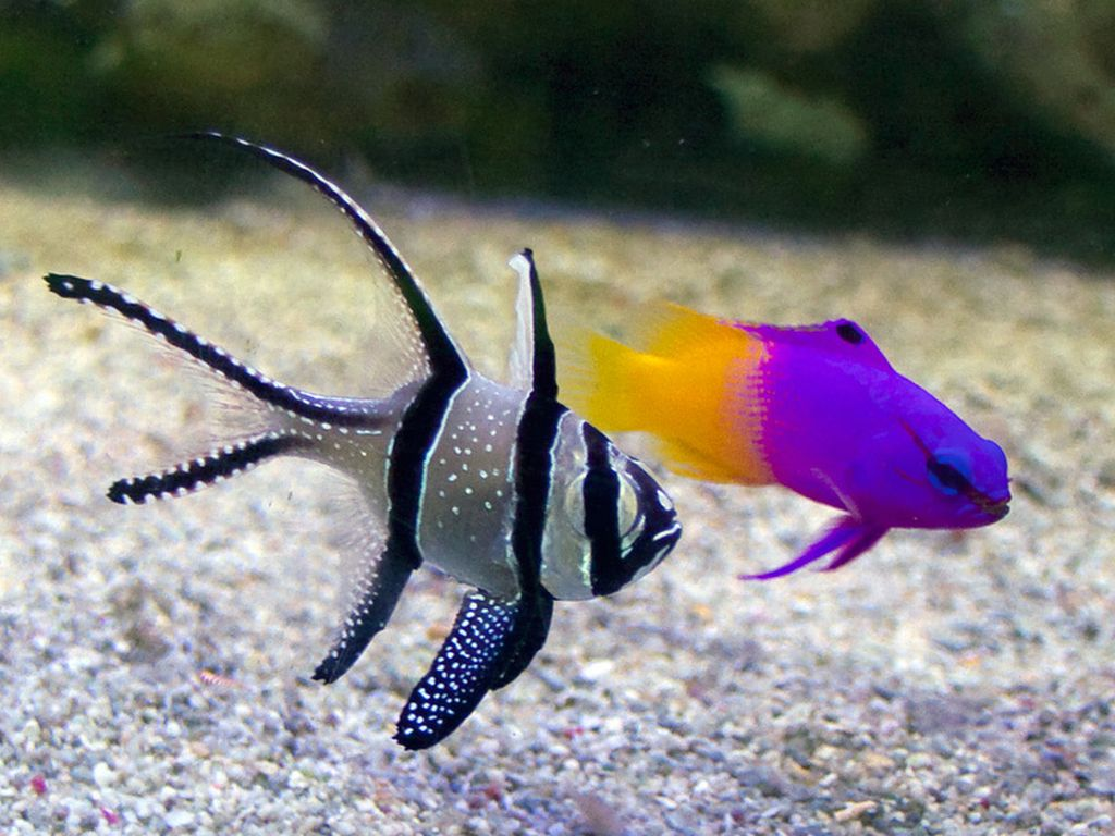 Правильный уход и содержание аквариумных рыбок