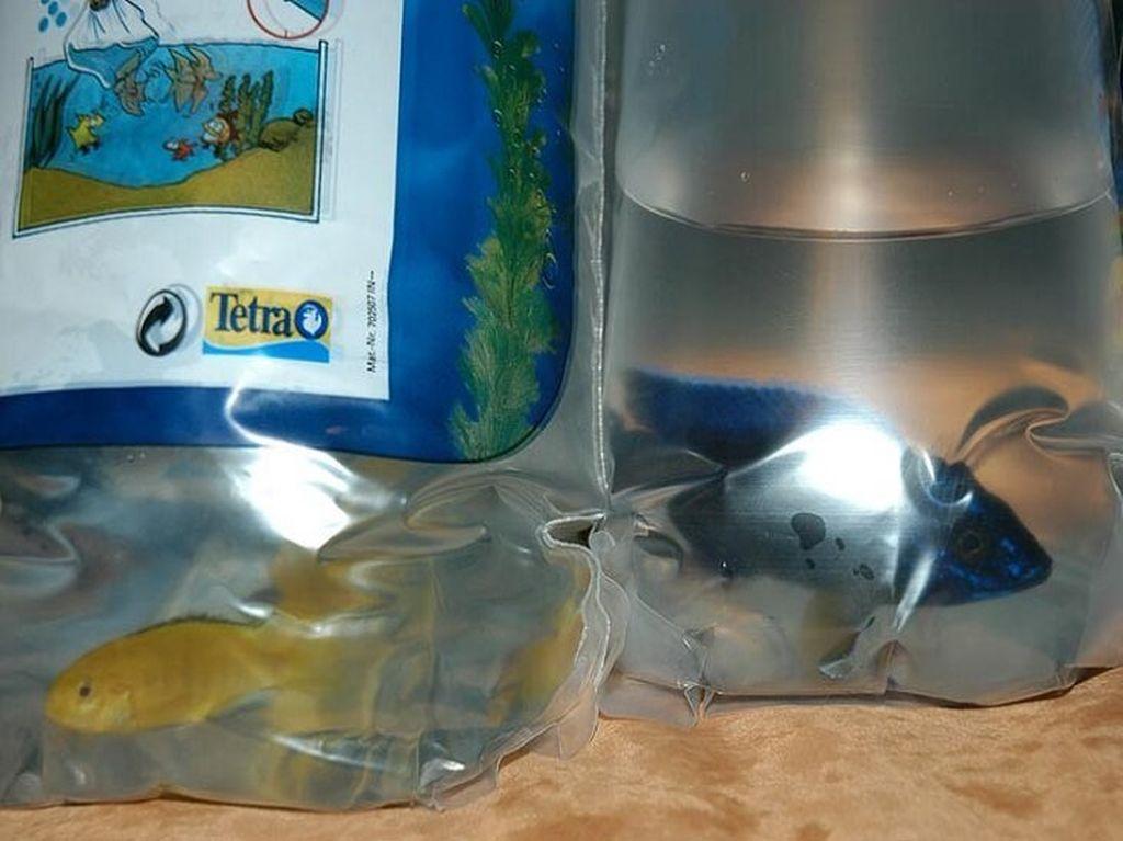 После покупки нельзя сразу запускать рыбок в аквариум