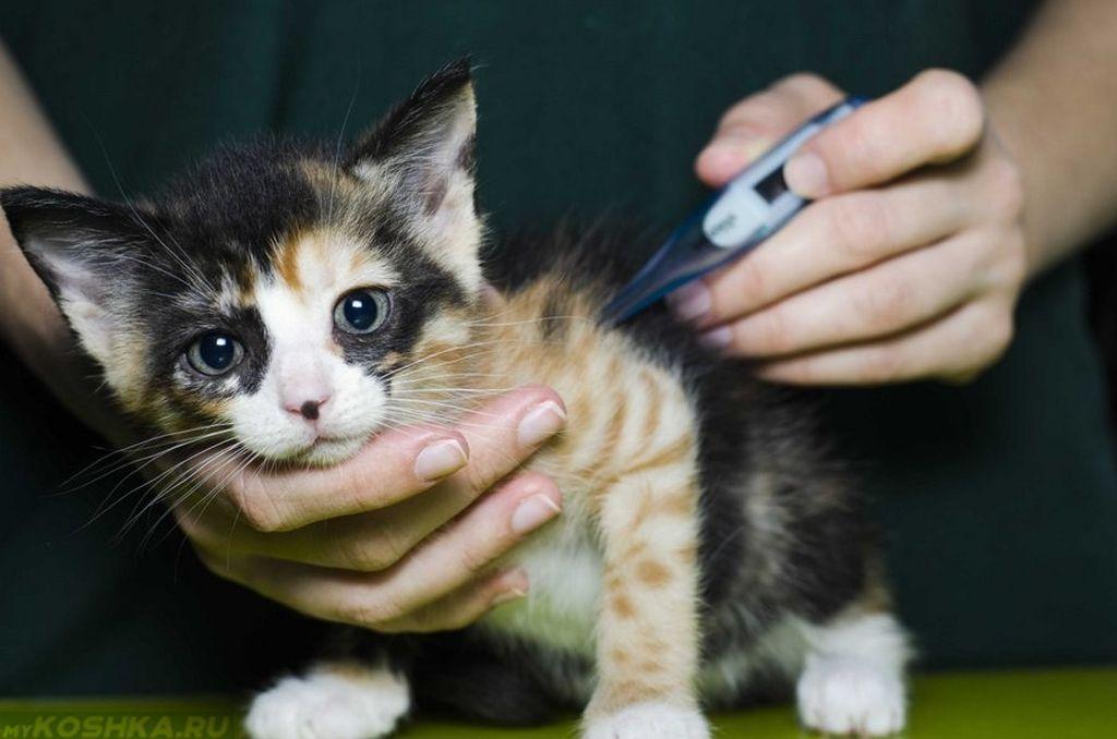 Инструкция по использованию Фуросемида для кошек и собак