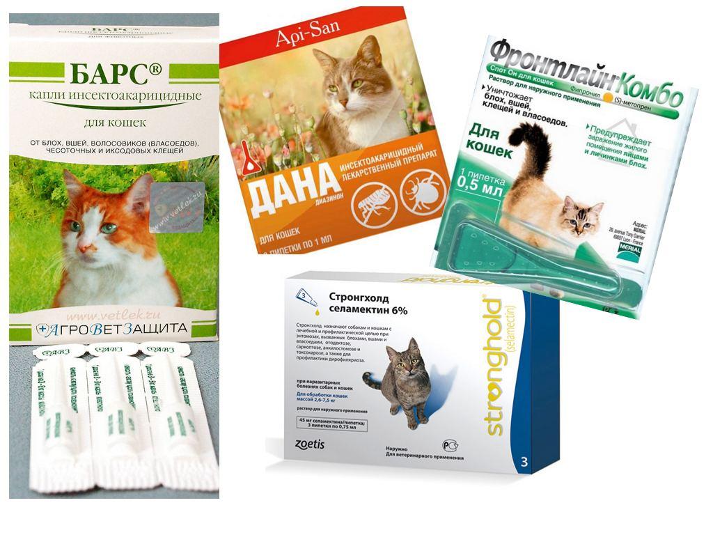 Как вылечить котенка от блох в домашних условиях 116