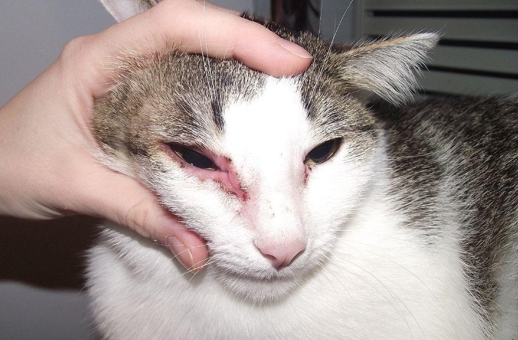 При появлении аллергии прием препарата нужно немедленно приостановить