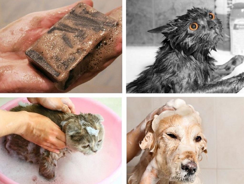 Использование дегтярного мыла