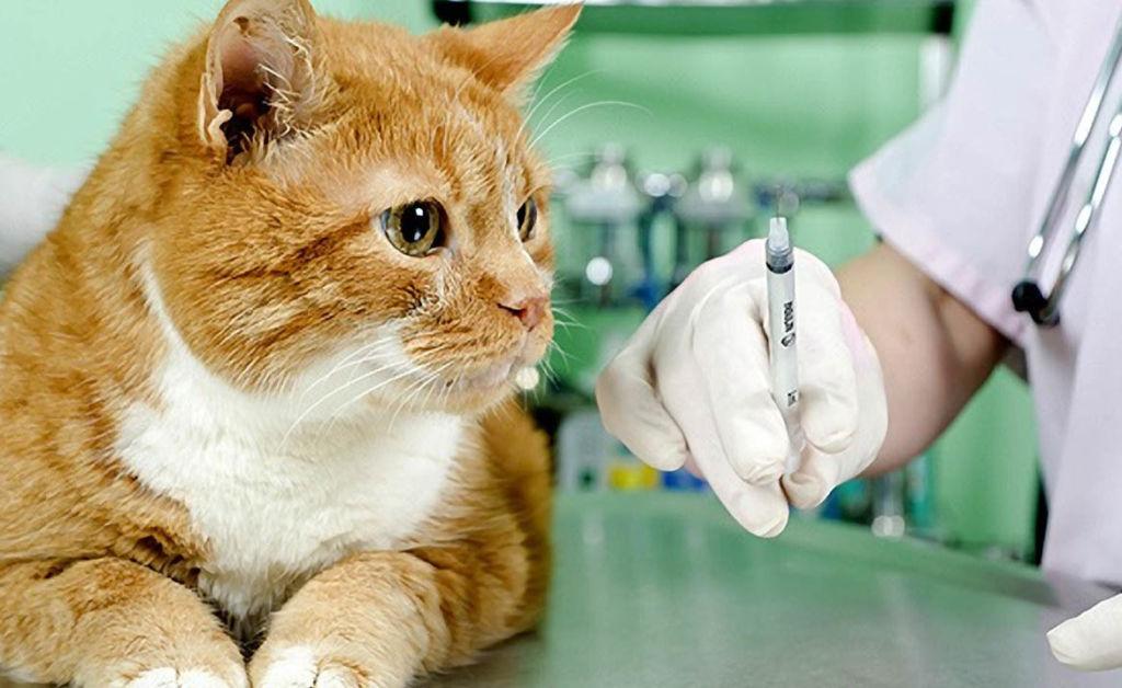 Вакцина вводится под кожу