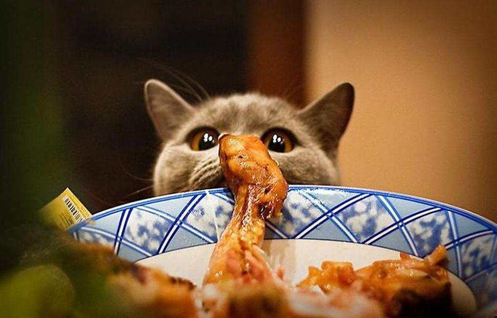 После применения капель у кошки может усилиться аппетит