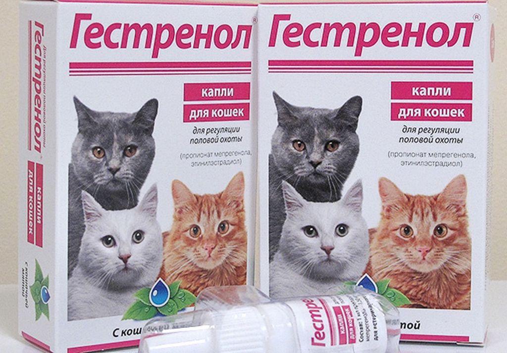 Применение конрасекс для кошек