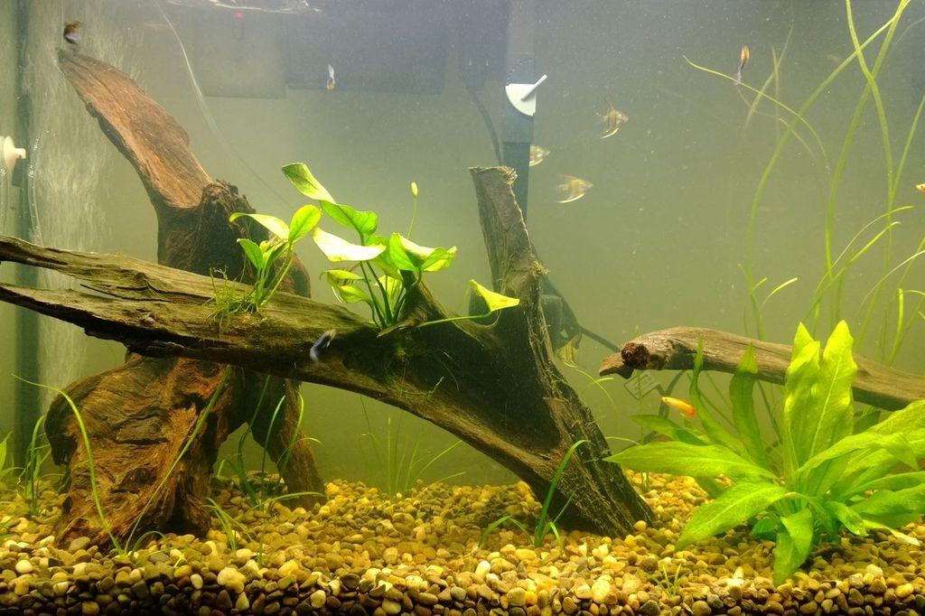 Для профилактики распространения улиток нужно следить за чистотой аквариума