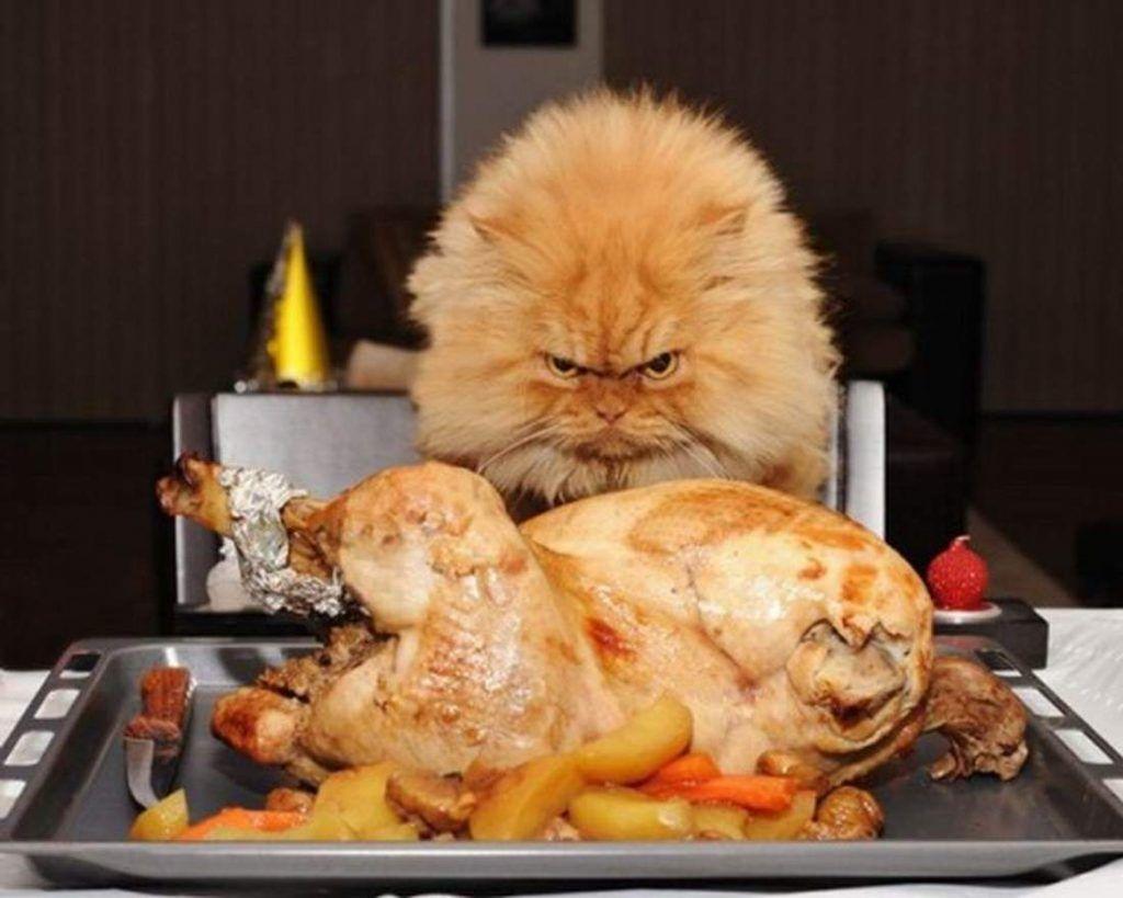 Для восполнения недостатка таурина можно вводить в меню кошки индейку