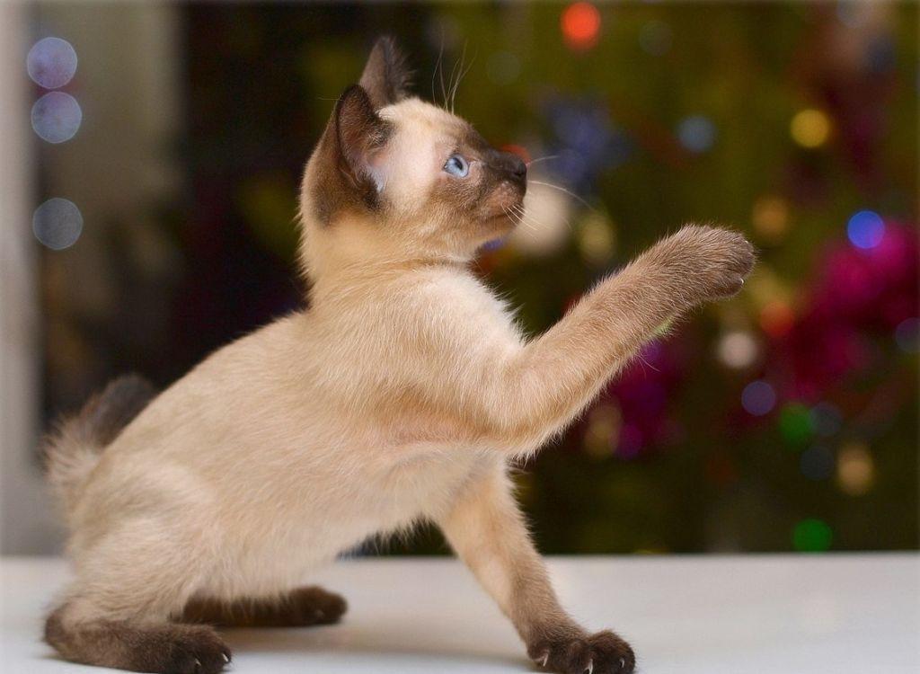 Корм Royal Canin (Роял Канин) для кошек – купить корма в