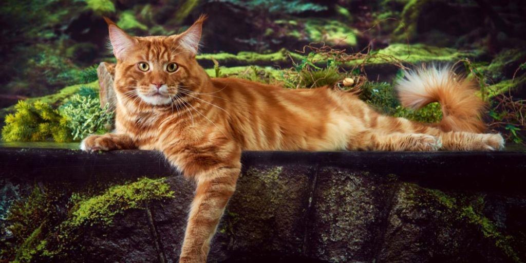 6 самых злых пород кошек в мире