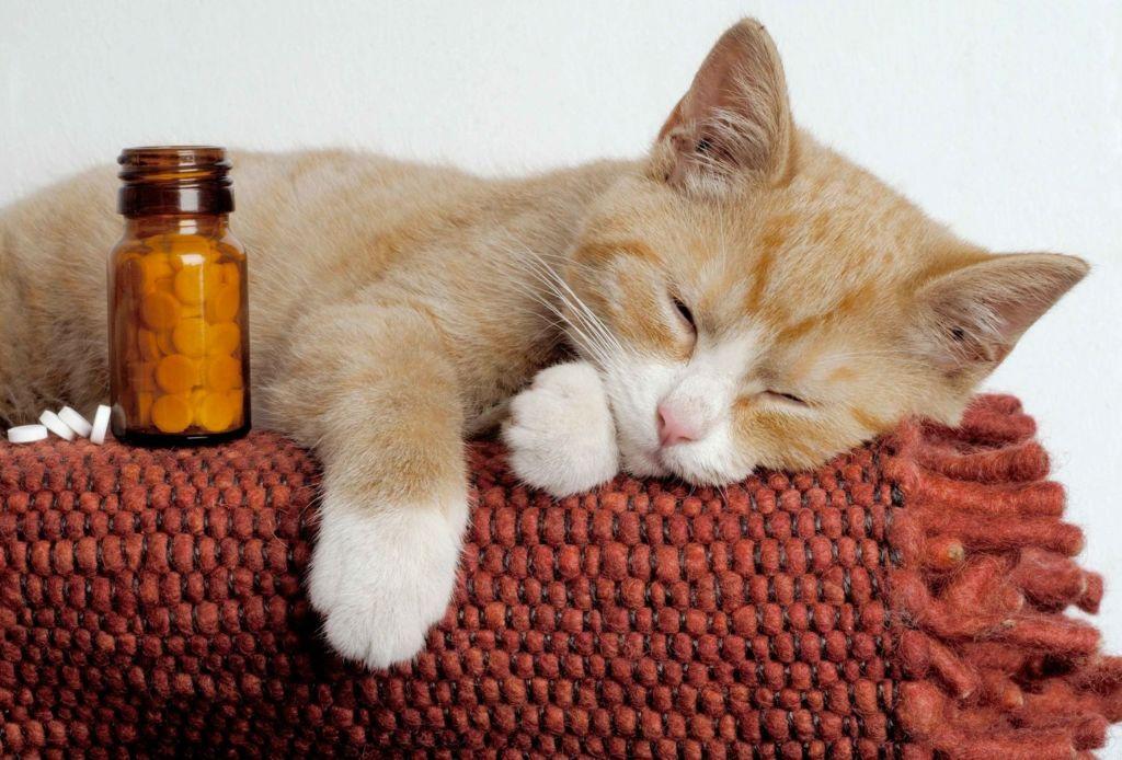 Обычно таблетку помещают в кусочек сыра или в мягкий корм