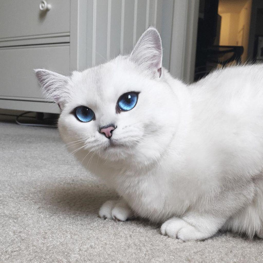 Кот Коби появился в Instagram в июне 2015 года