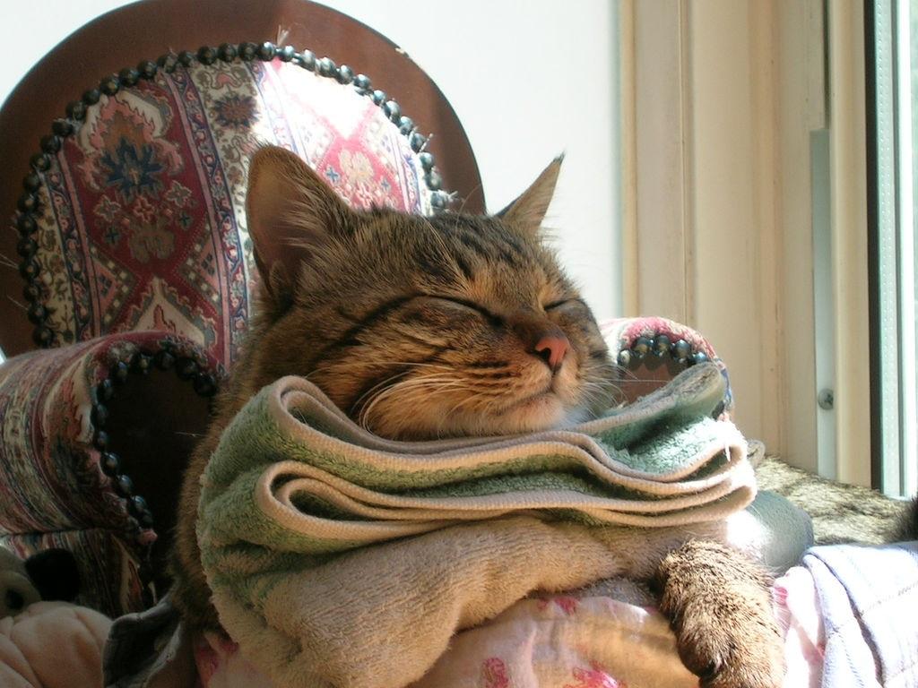 Кошки Ли Хуа нуждаются в свободном пространстве