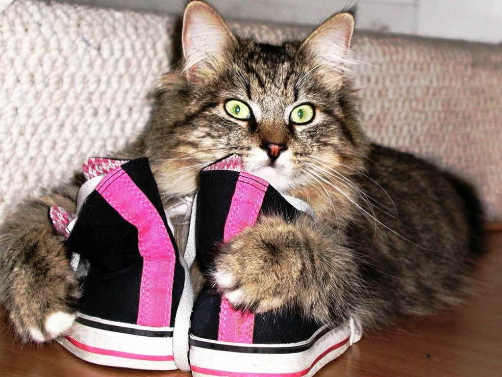 Владельцу кота следует внимательно понаблюдать за поведением питомца