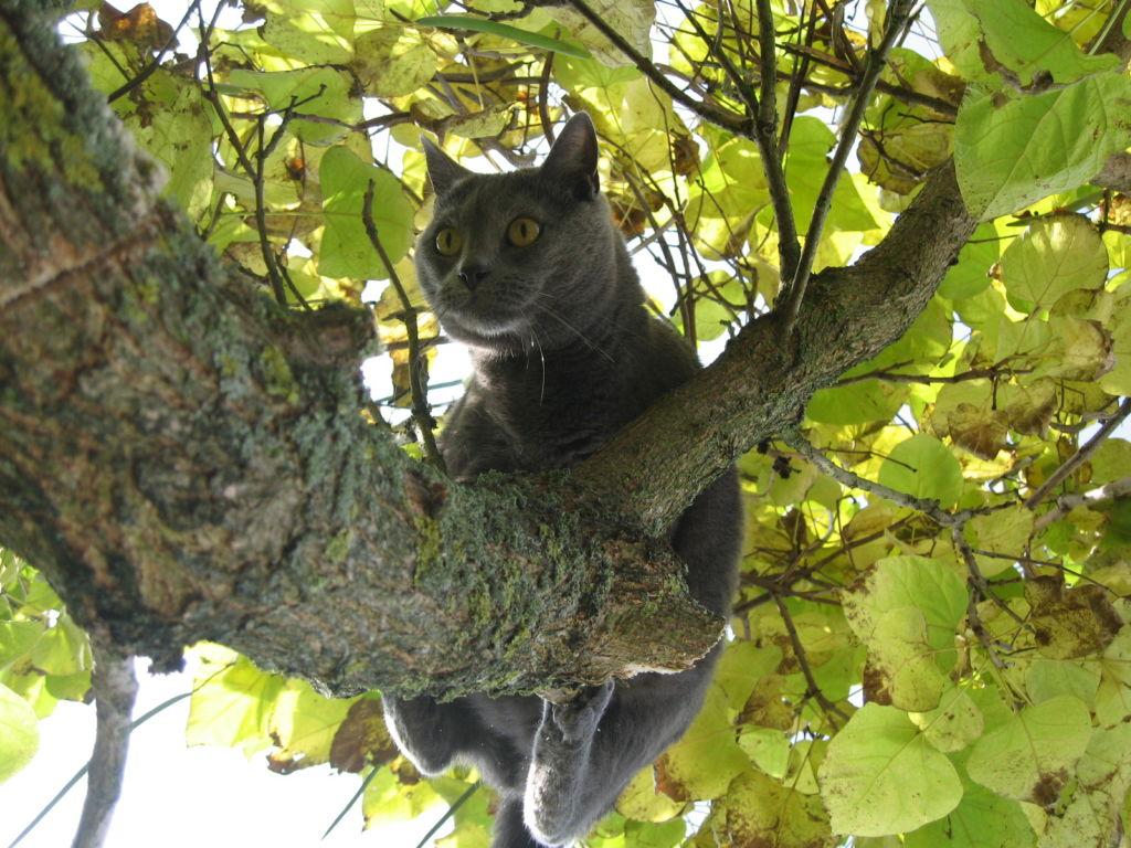 шартрез на дереве