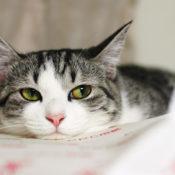 6 видов кормов для стерилизованных кошек