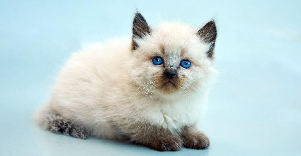 Цена котят начинается от 15 000 рублей