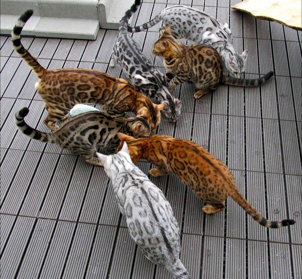 Котов следует кормить или сушкой или натуралкой