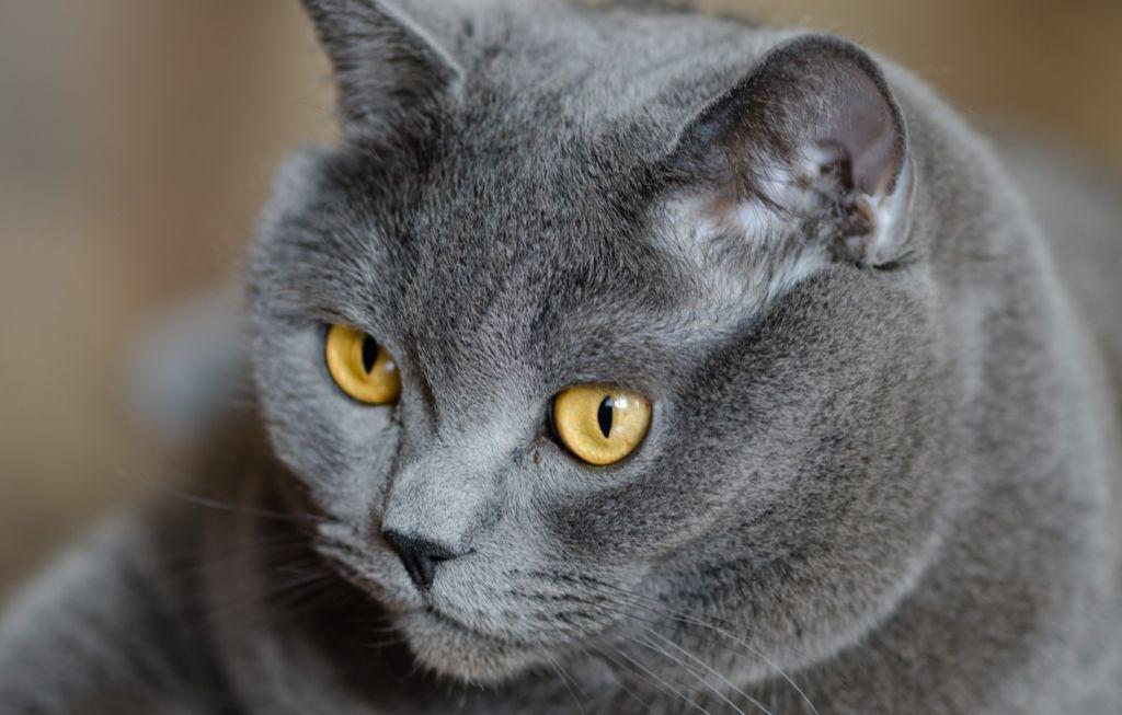 При натуральном кормлении важно давать коту и витамины