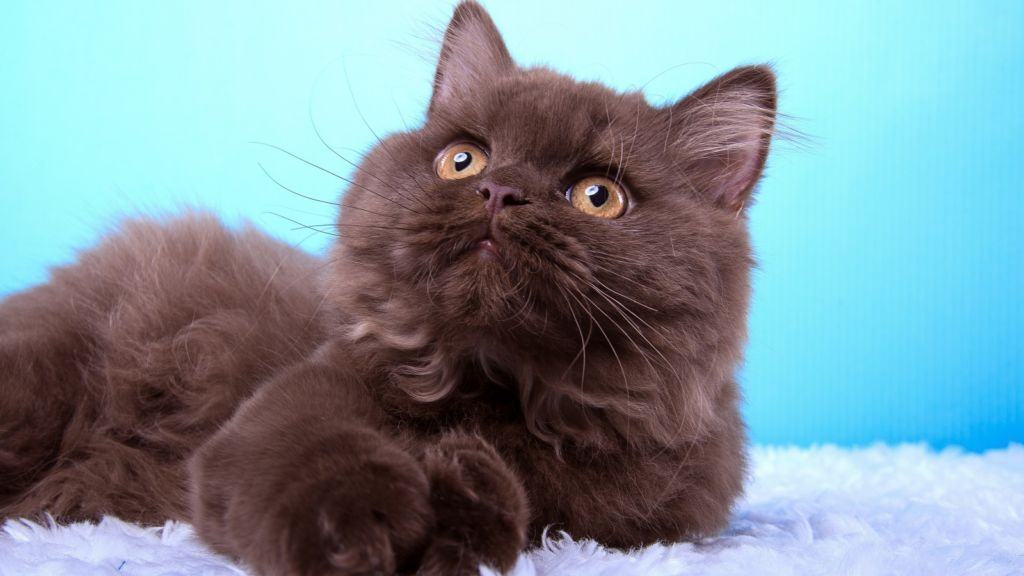 Кошкам с вирусными заболеваниями, с бактериальными или грибковыми инфекциями, иммуномодулирующие препараты назначаются с осторожностью