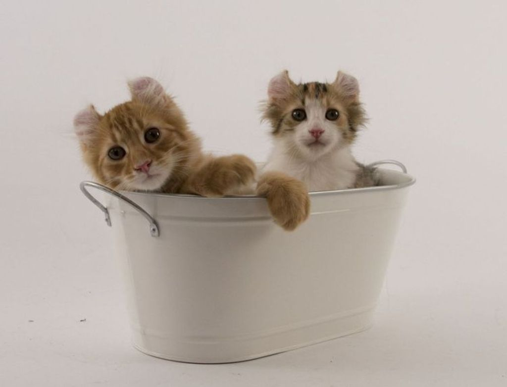 Кошка является игривой и подвижной