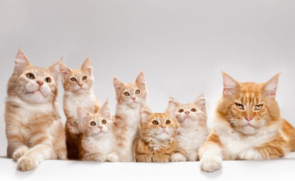 5 видов наполнителей для кошачьего туалета: какой лучше