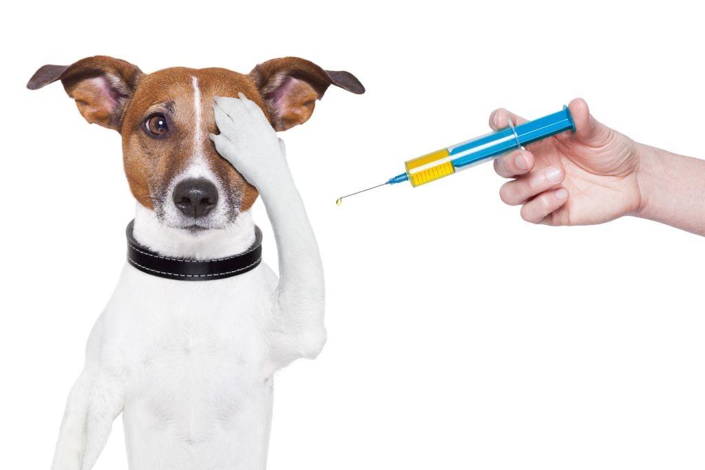 Лиарсин для собак оказывает выраженное положительное действие