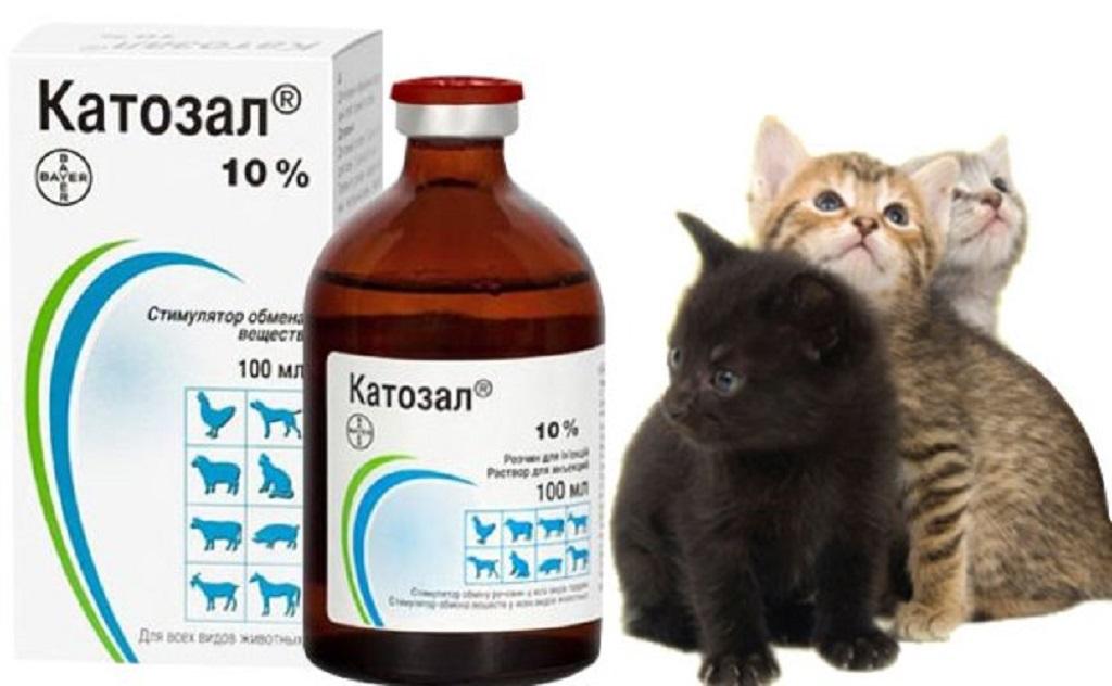Катозал укрепляет иммунитет и стимулирует рост кошки