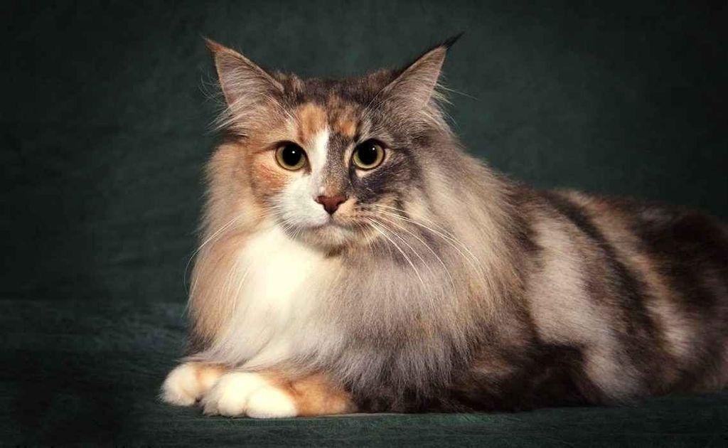 Метисы кошек