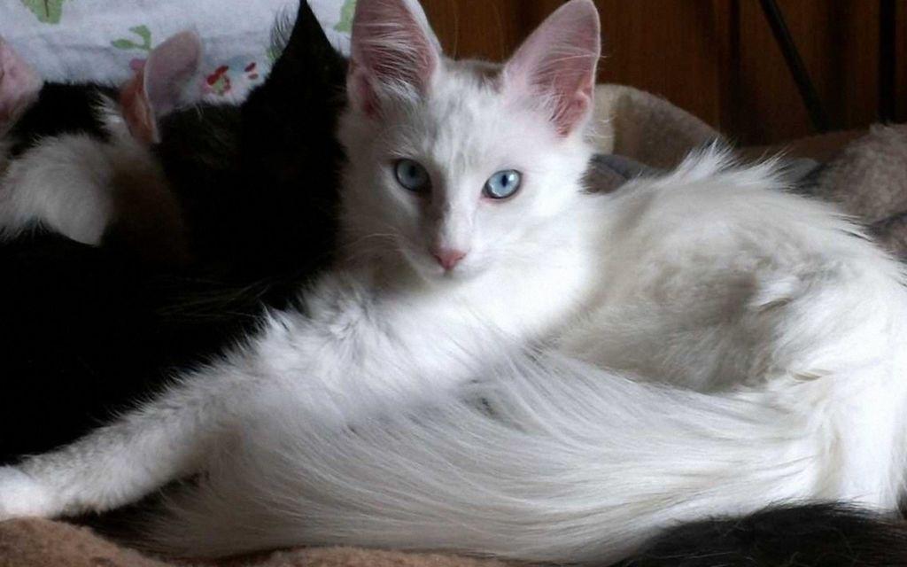 После еды кошки обычно укладываются на сон
