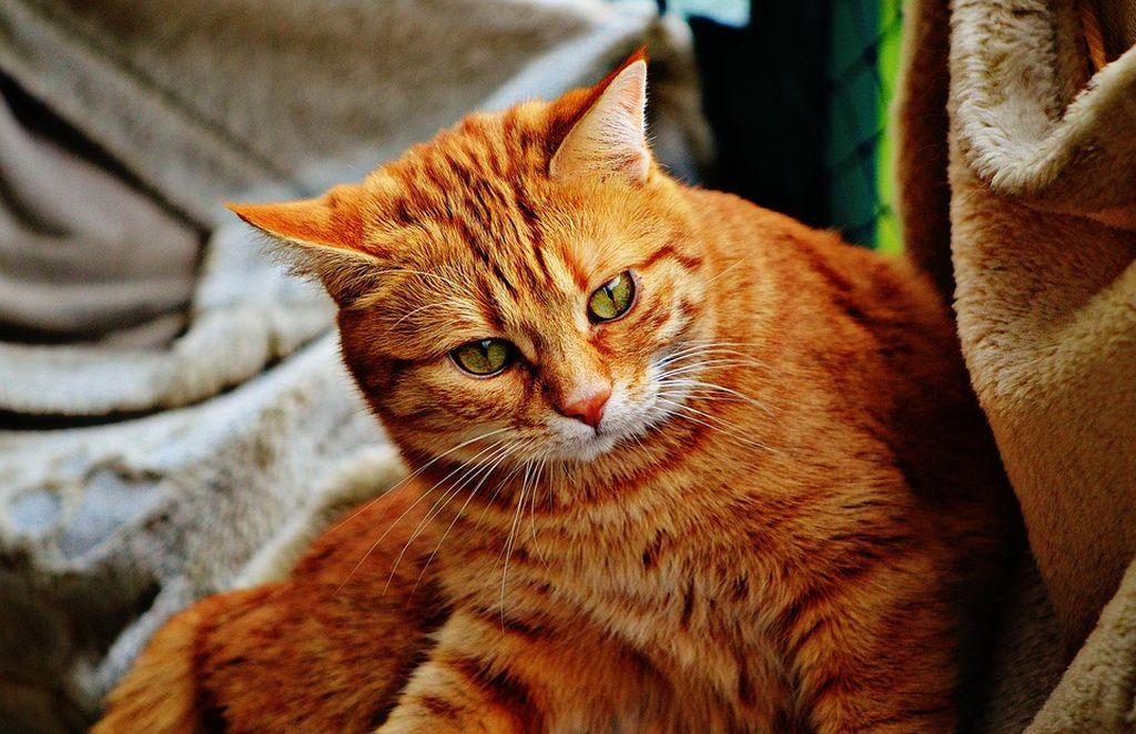 Что несет в дом рыжий кот
