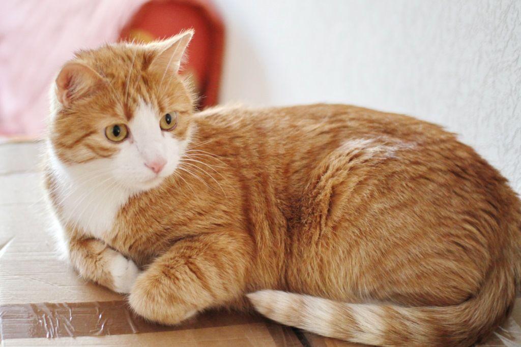 Каждая рыжая кошка имеет разный, причем не однотонный окрас