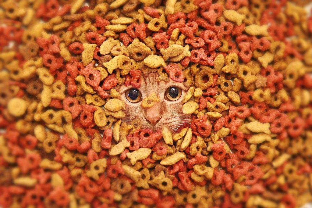Этой породе кошек необходим корм, богатый витаминами