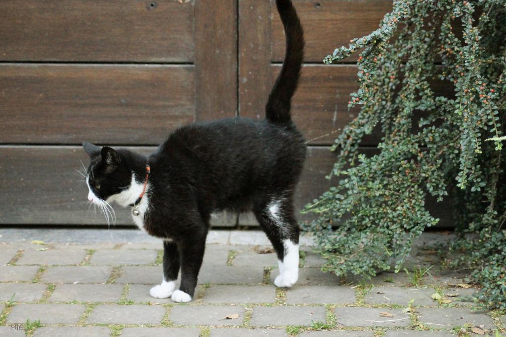 Метить территорию – естественное стремление практически любого половозрелого кота