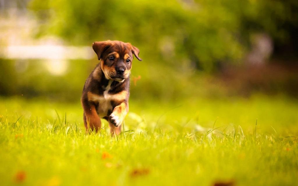 Лекарственный препарат гликопин не предназначен для применения продуктивным животным