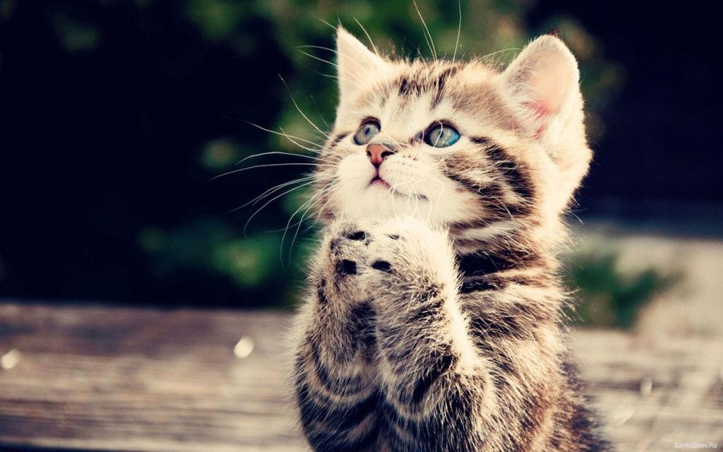 У котят могут проявляться симптомы почечной недостаточности