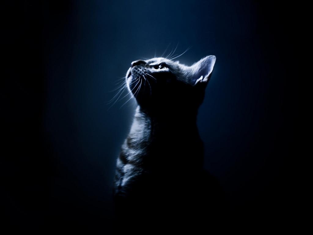 Своевременное выявление вируса иммунодефицита наначальной стадии ихороший уход за животным повышают шансы того, что кошка проживет еще долго