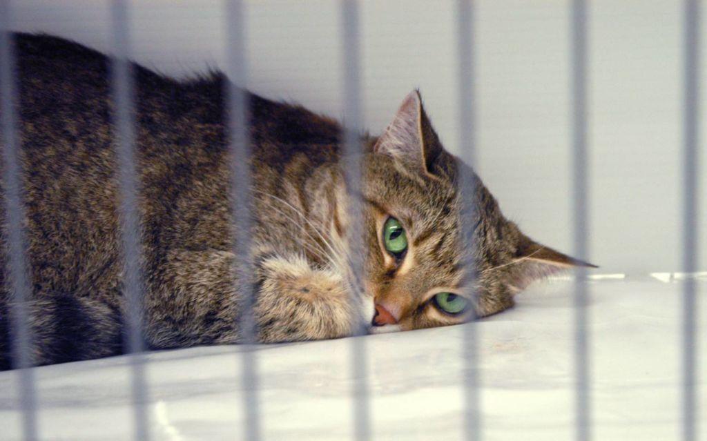 Приют - наихудший вариант пристройки кошки