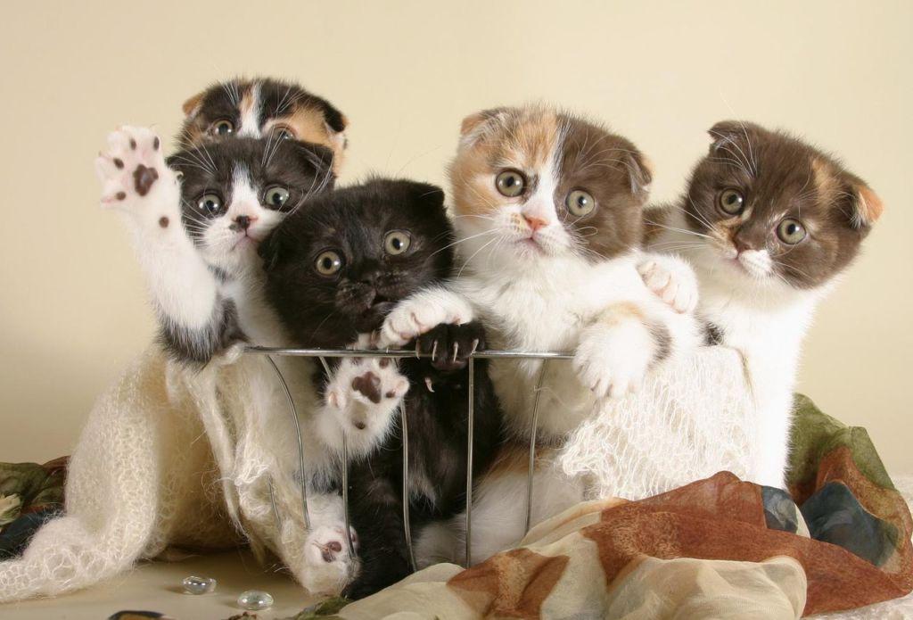 Статистика гласит, что вакцинация в слишком юном возрасте не очень хороша для котят