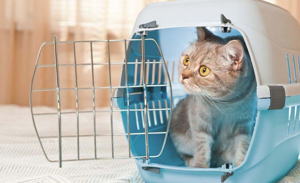 Как сделать переноску для кошек своими руками